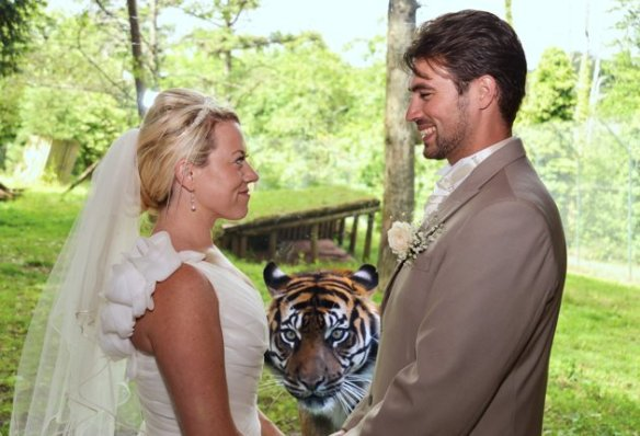 Check Out This Tiger Photo-bomb A Newlywed Couple